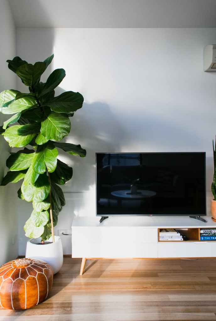 tv near green plant in room